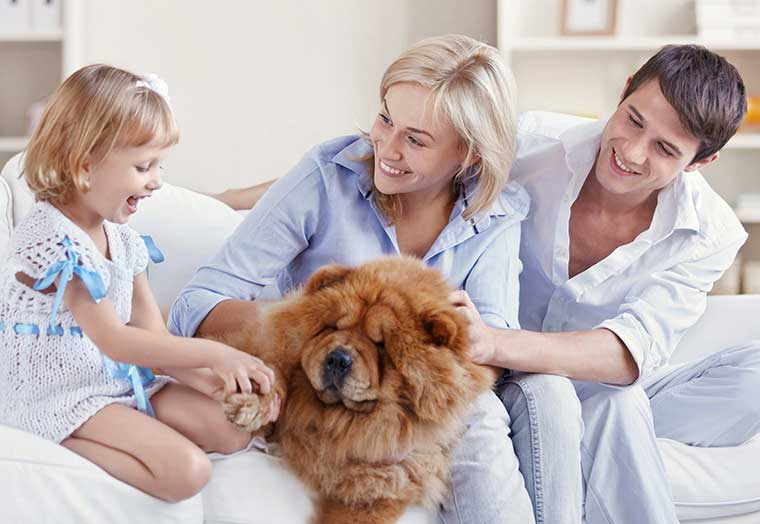 Image of a young family petting a dog in the living room.